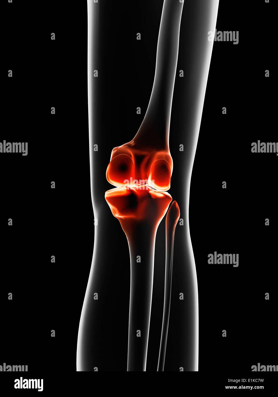 Human knee joint computer artwork. Stock Photo
