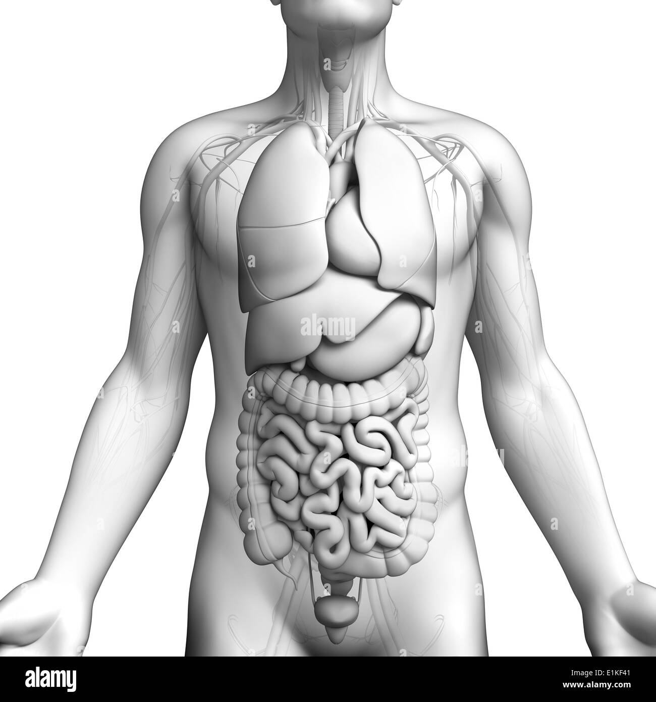 Rectum Black and White Stock Photos & Images - Alamy