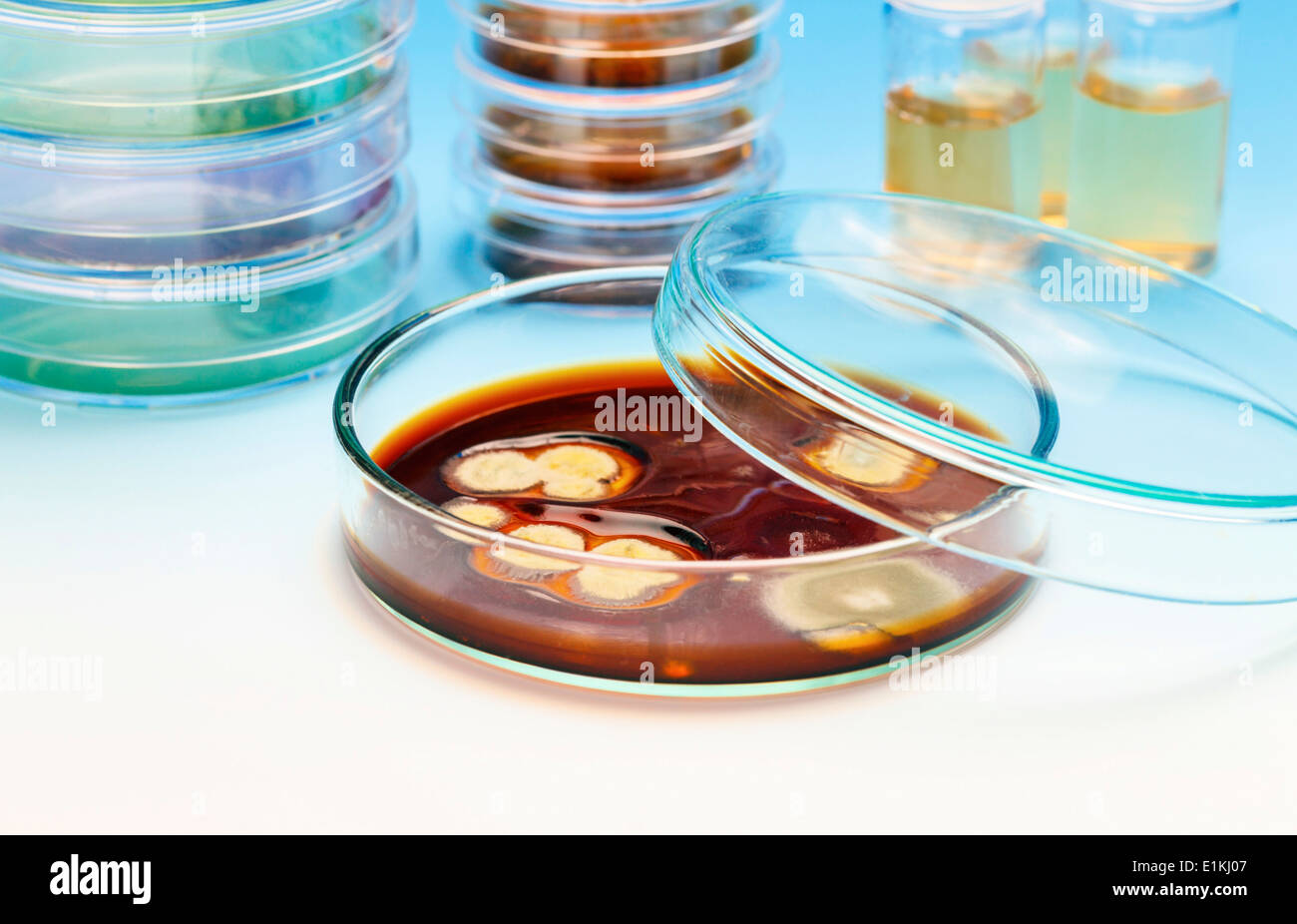 Petri dishes with samples of biological cultures. - Stock Image