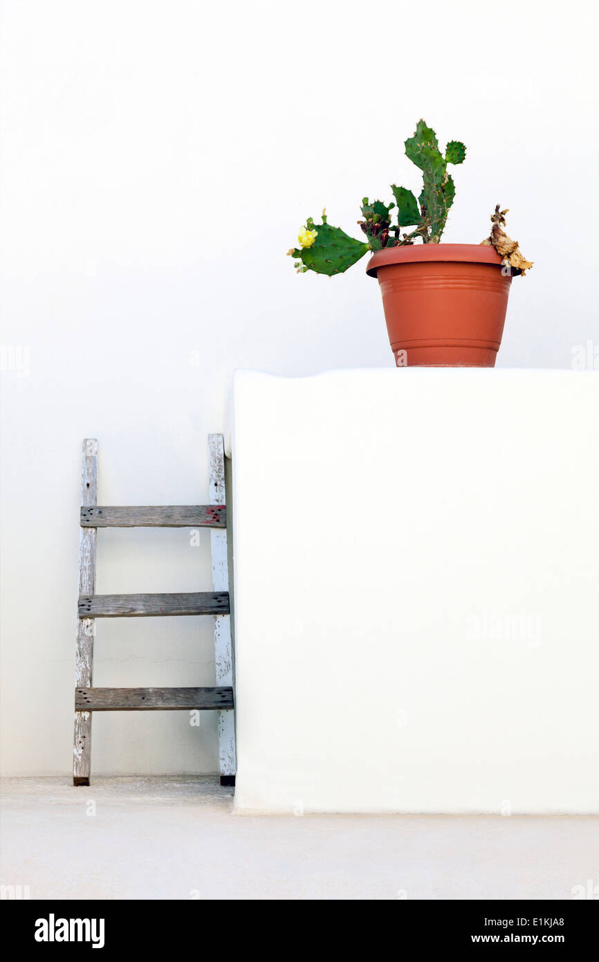 Cactus in plant pot against a white wall with ladders. - Stock Image