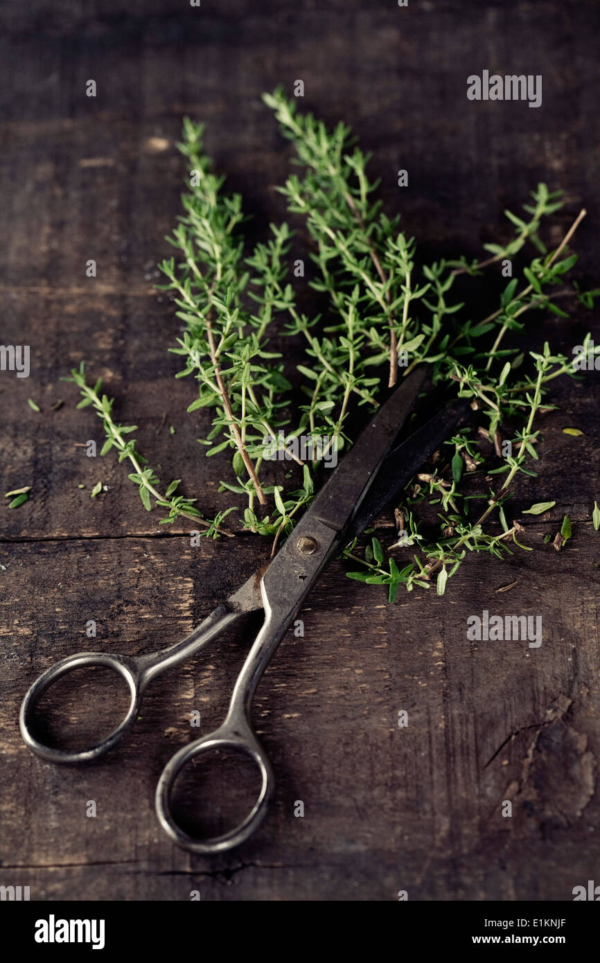 Fresh Thyme and scissors on the old kitchen table - Stock Image