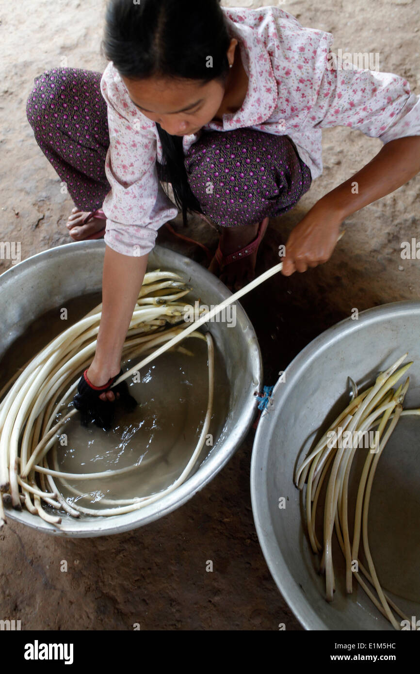 Young woman washing lotus flower stems - Stock Image