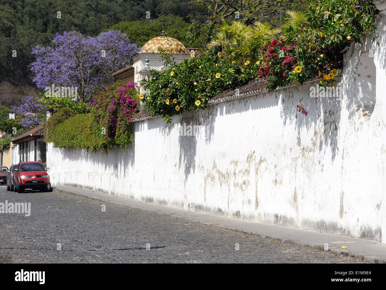 Flowering shrubs and climbers tumble over a white garden wall Stock