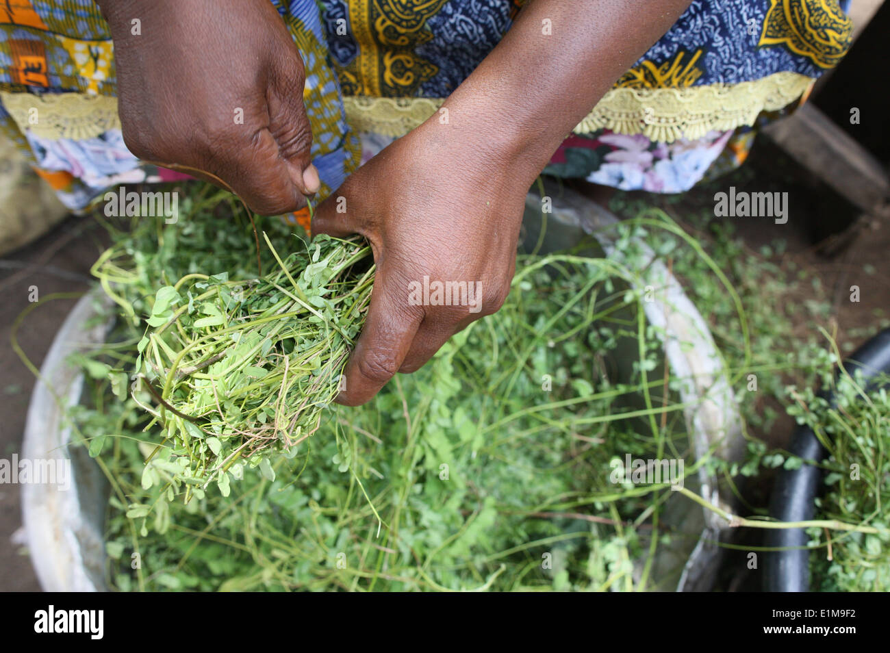 Herbal medicine - Stock Image