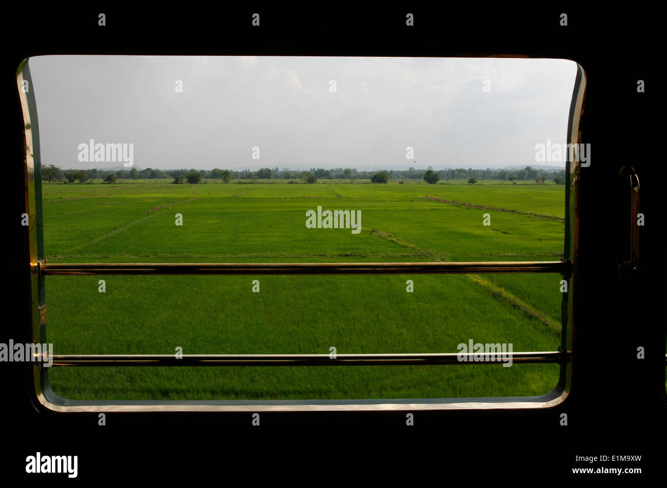Rice field seen from the Eastern & Oriental Express train - Stock Image