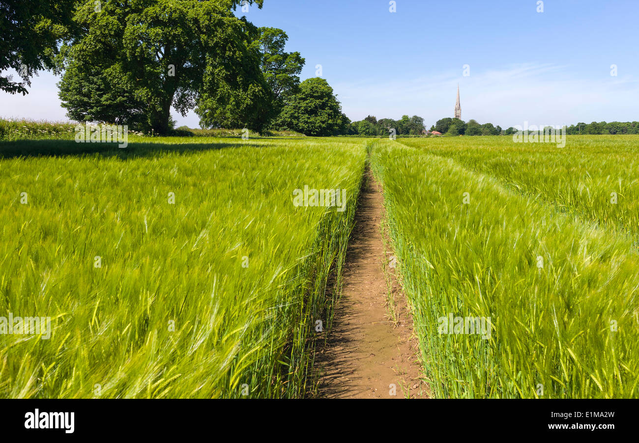 Wheat field on a bring spring morning with St Mary's Church on the horizon in the village of South Dalton, Yorkshire. - Stock Image