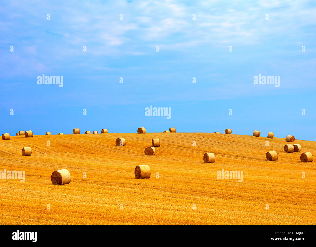 Rural landscape with golden straw bales at a sunny day in october Stock Photo