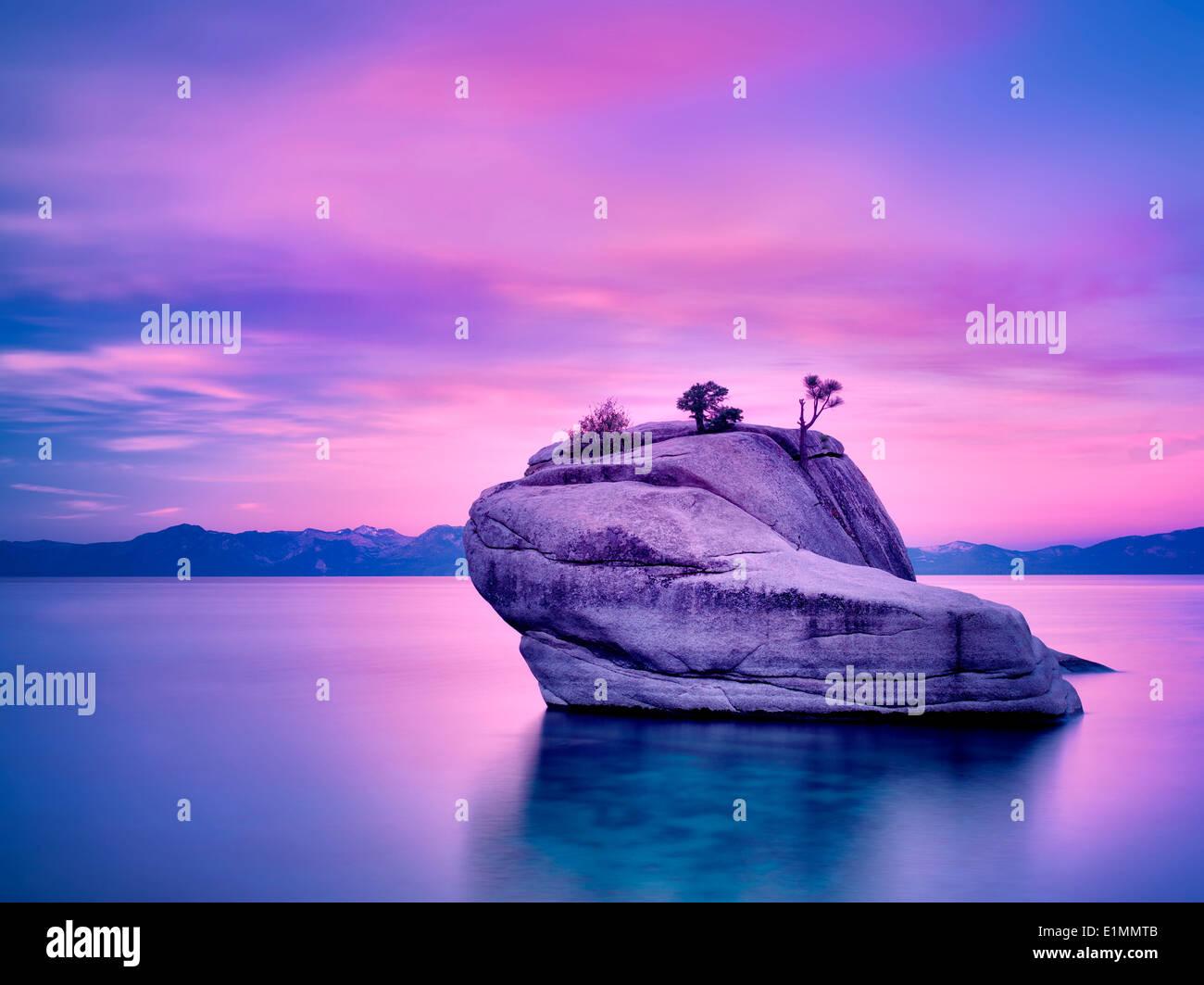 Bonsai tree on boulder with sunrise. Lake Tahoe, Nevada - Stock Image