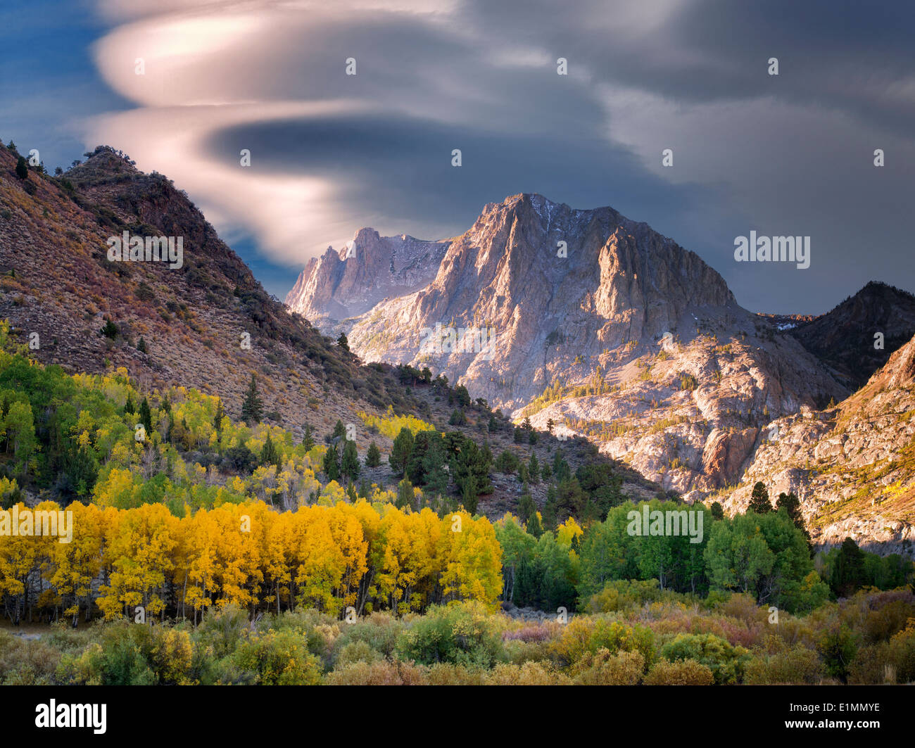 Aspen trees in fall color and mountains around June Lakes Loop.Eastern Sierra Nevada Mountains, California - Stock Image