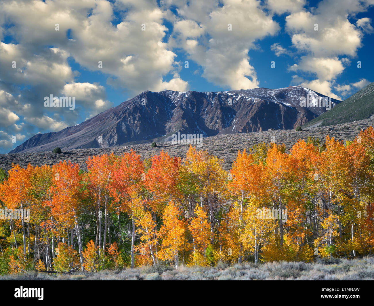 Bloody Canyon. aspen trees in fall color. Eastern Sierra Nevada Mountains, California - Stock Image