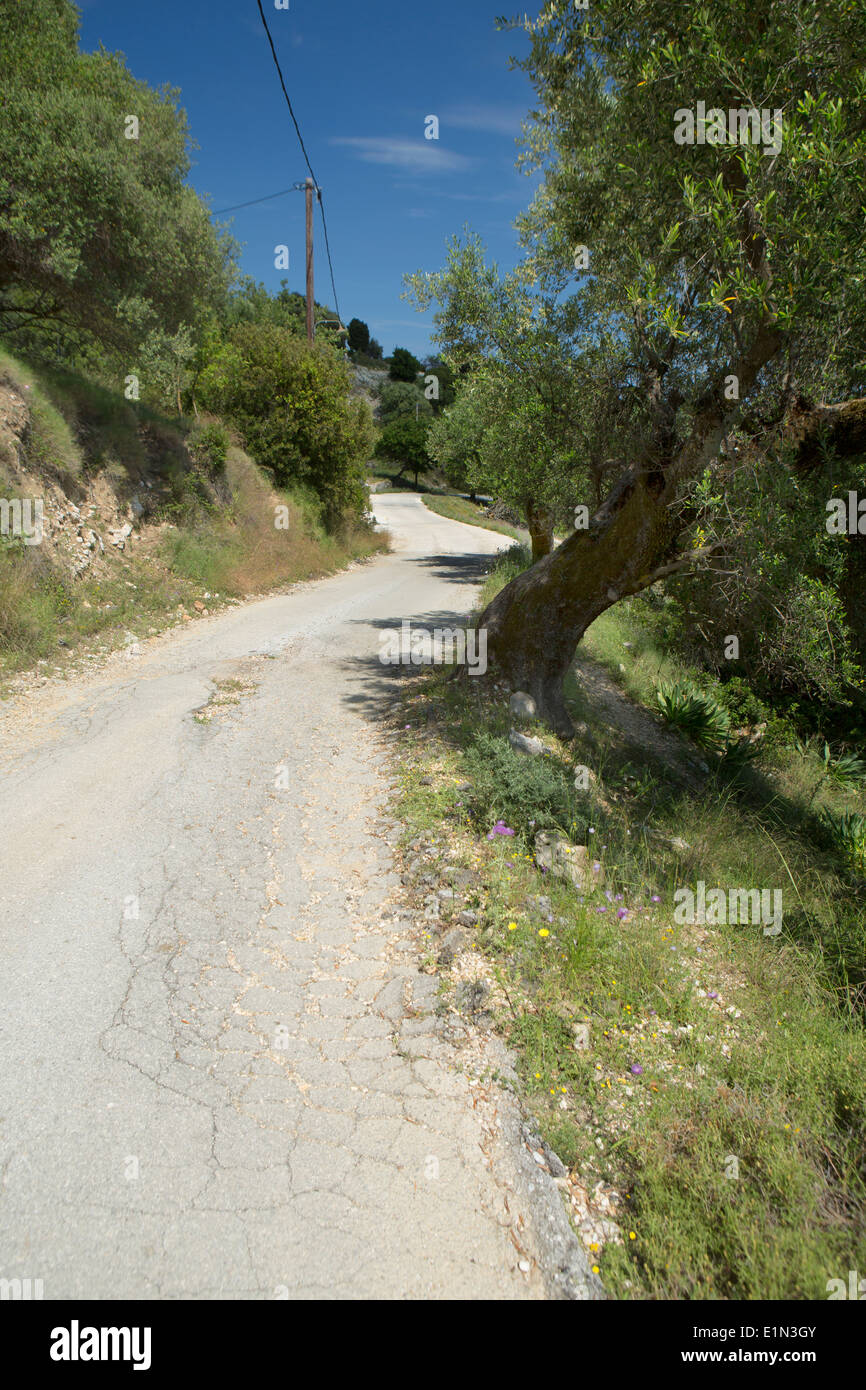 An old road winds around Olive trees in Kefalonia Stock Photo