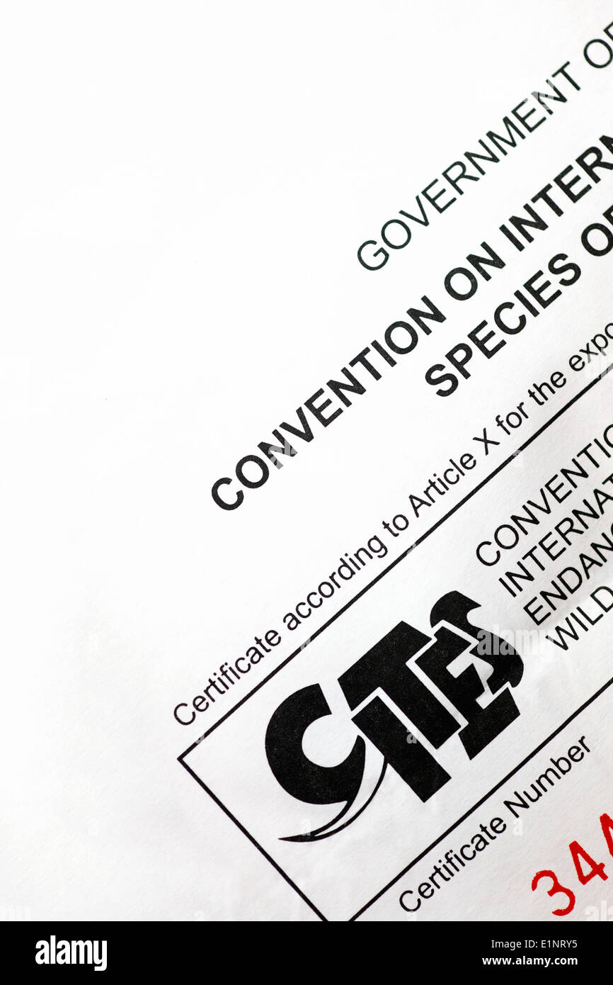 CITES permit form  (Convention on International Trade in Endangered Species of Wild Fauna and Flora) - Stock Image