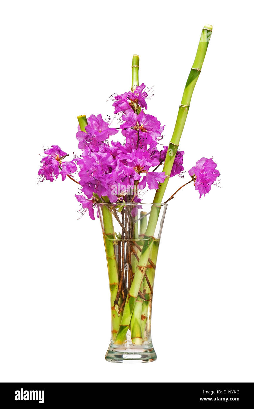 Colorful flower bouquet from purple rhododendron flowers on branch ...
