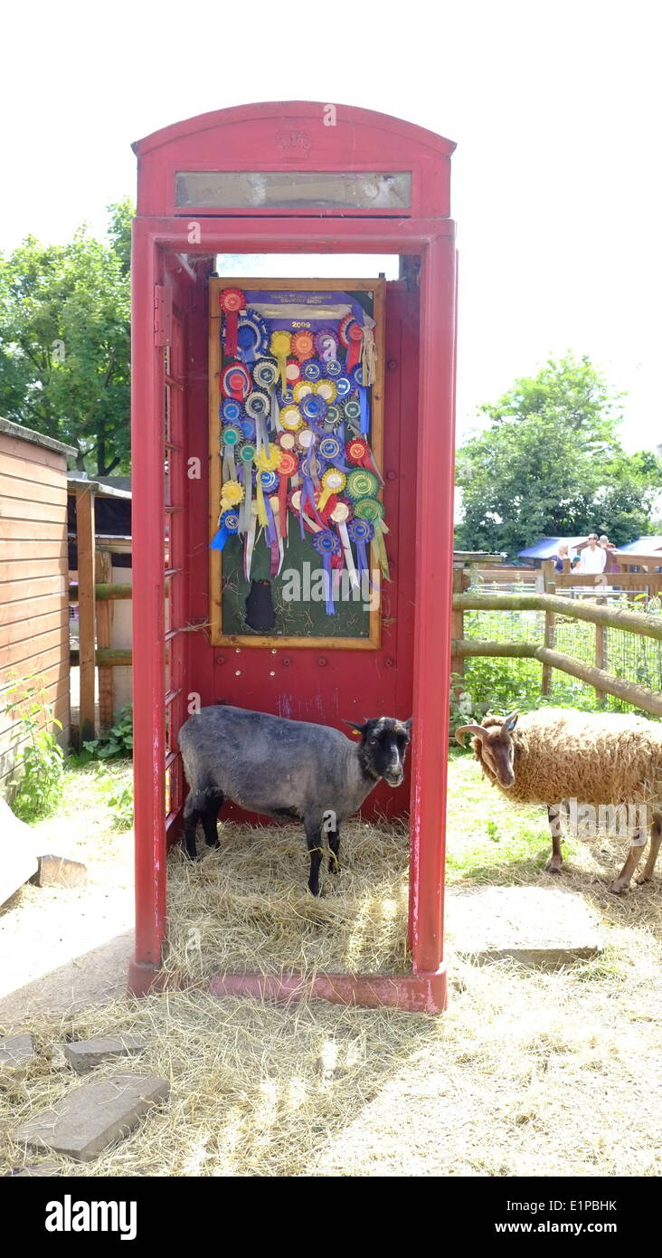London, UK. 08th June, 2014. Sheep in a red phone box at Sheep and Wool Fayre, Spitalfields city farm, London Credit:  Rachel Megawhat/Alamy Live News - Stock Image