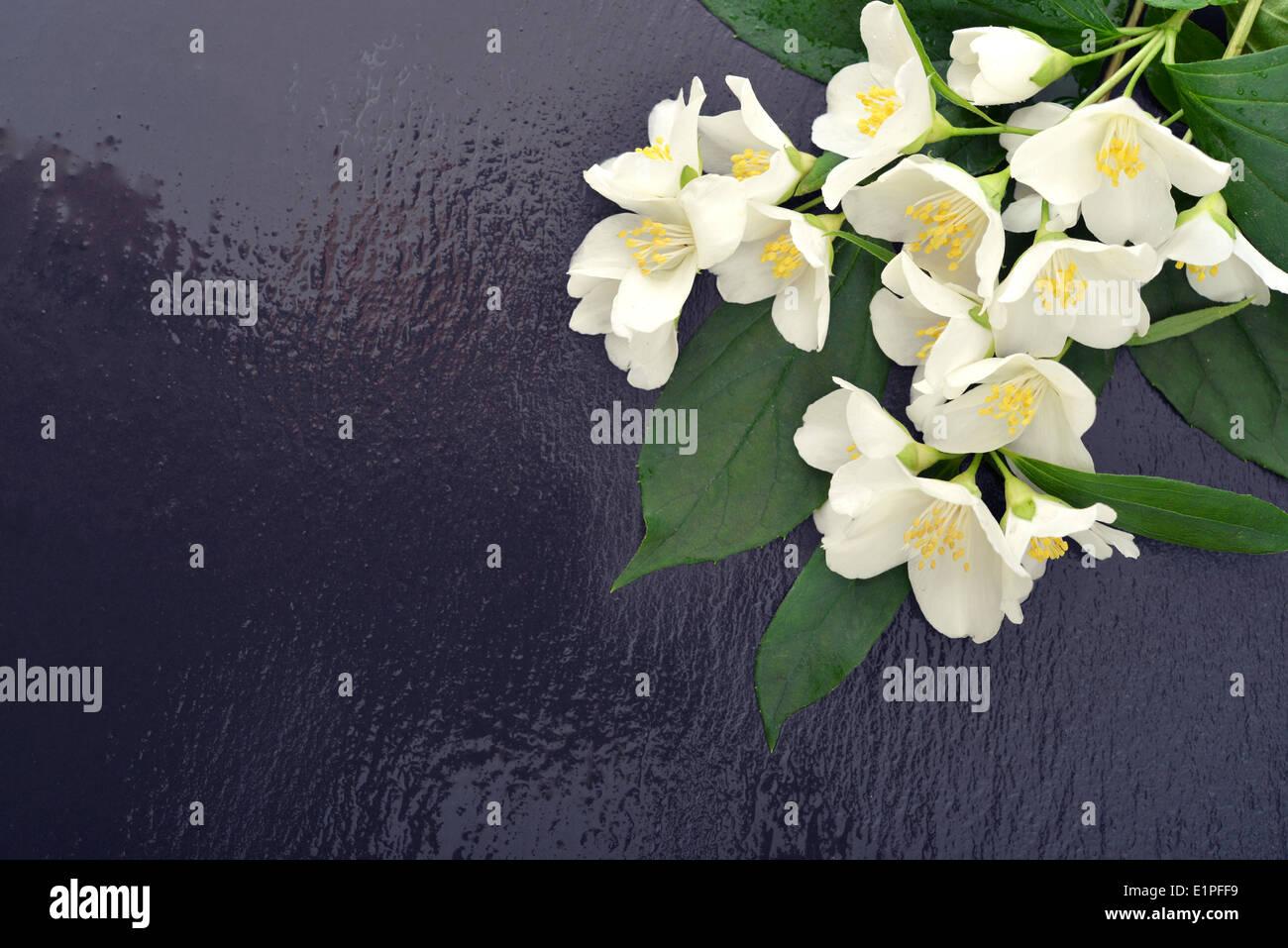 Bouquet jasmine flowers on wet stock photos bouquet jasmine bouquet of jasmine flowers on wet graphite background stock image izmirmasajfo