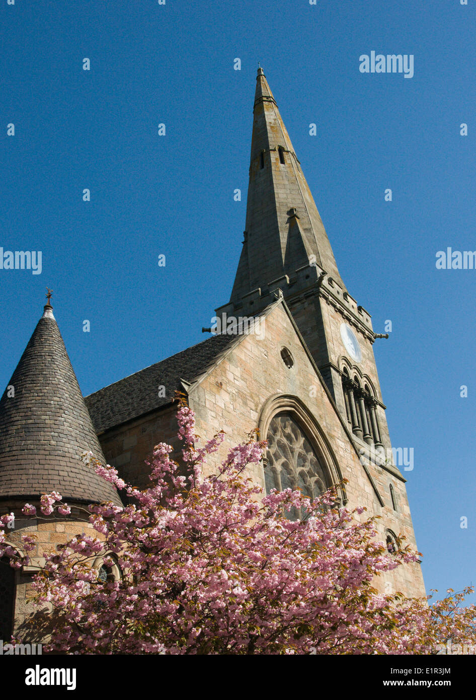 Dalziel Saint Andrews Church, Motherwell, Lanarkshire, with one of the  flowering cherry trees in its grounds Stock Photo