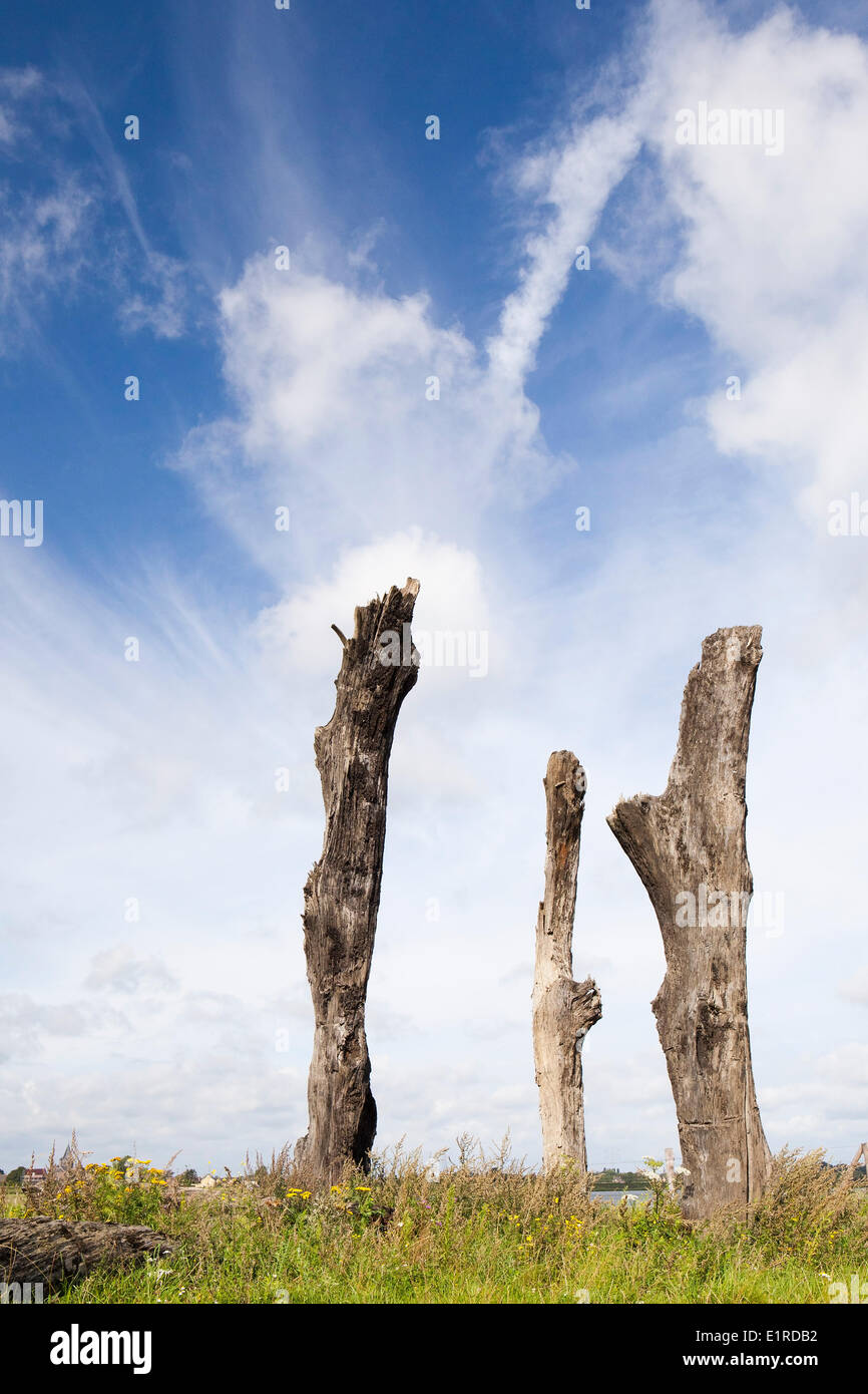 Monument of centuries old trees Stock Photo