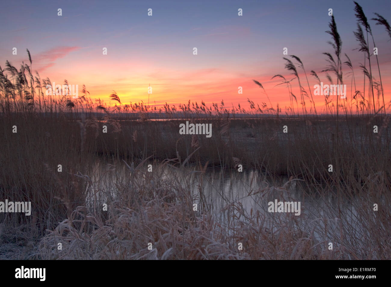 The flaming red sunrise contrasts with the cold blue ice and reed in the foreground. - Stock Image