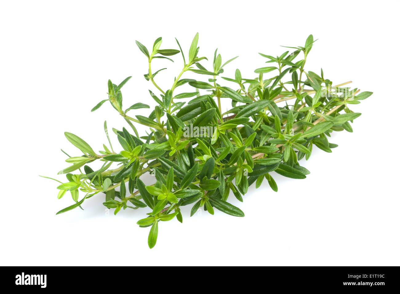 Savory bunch isolated on white background - Stock Image