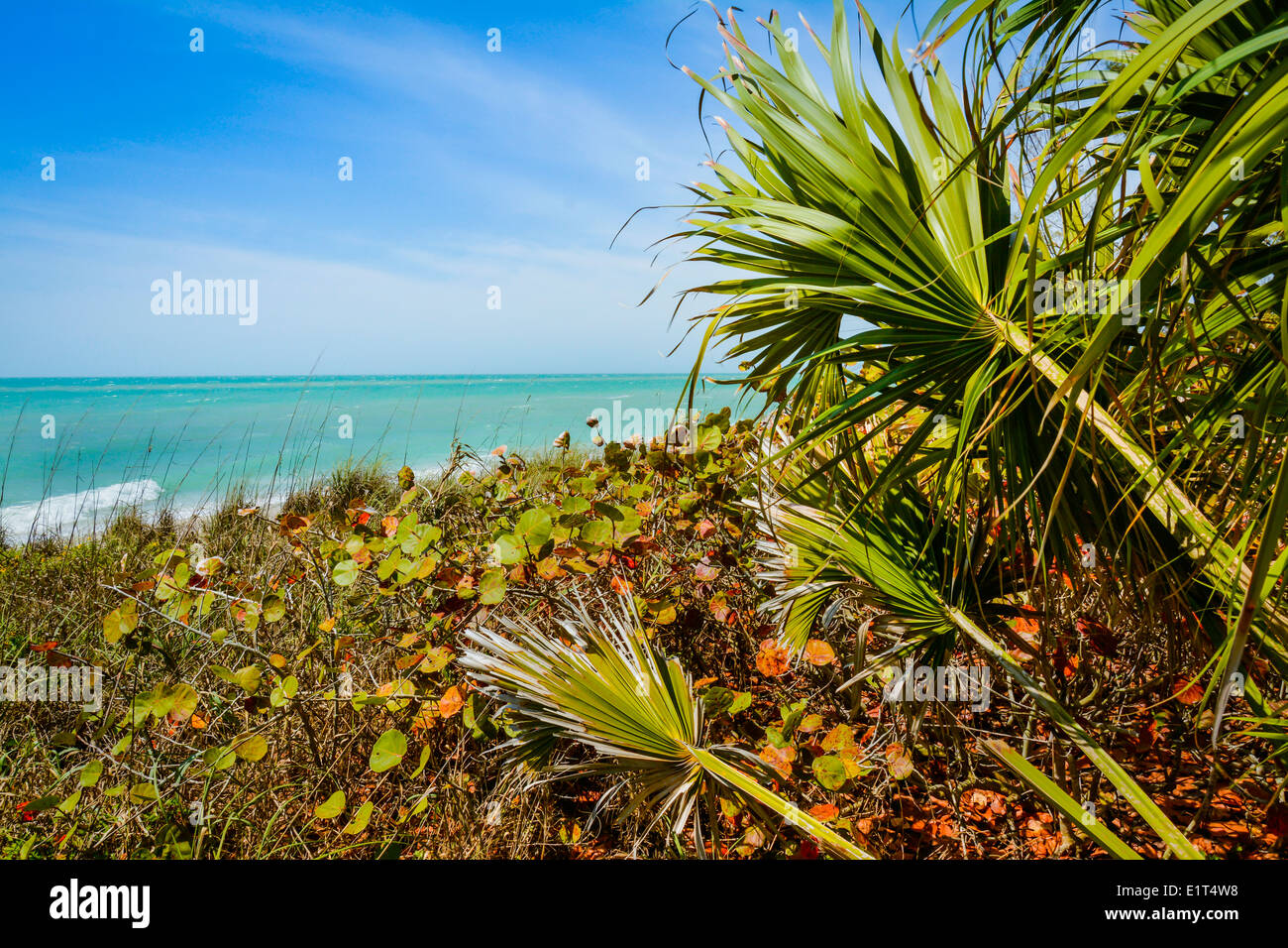 Lovely coastal vegetation enhances the view of the blue-green tranquil water on the outstretched horizon ahead - Stock Image