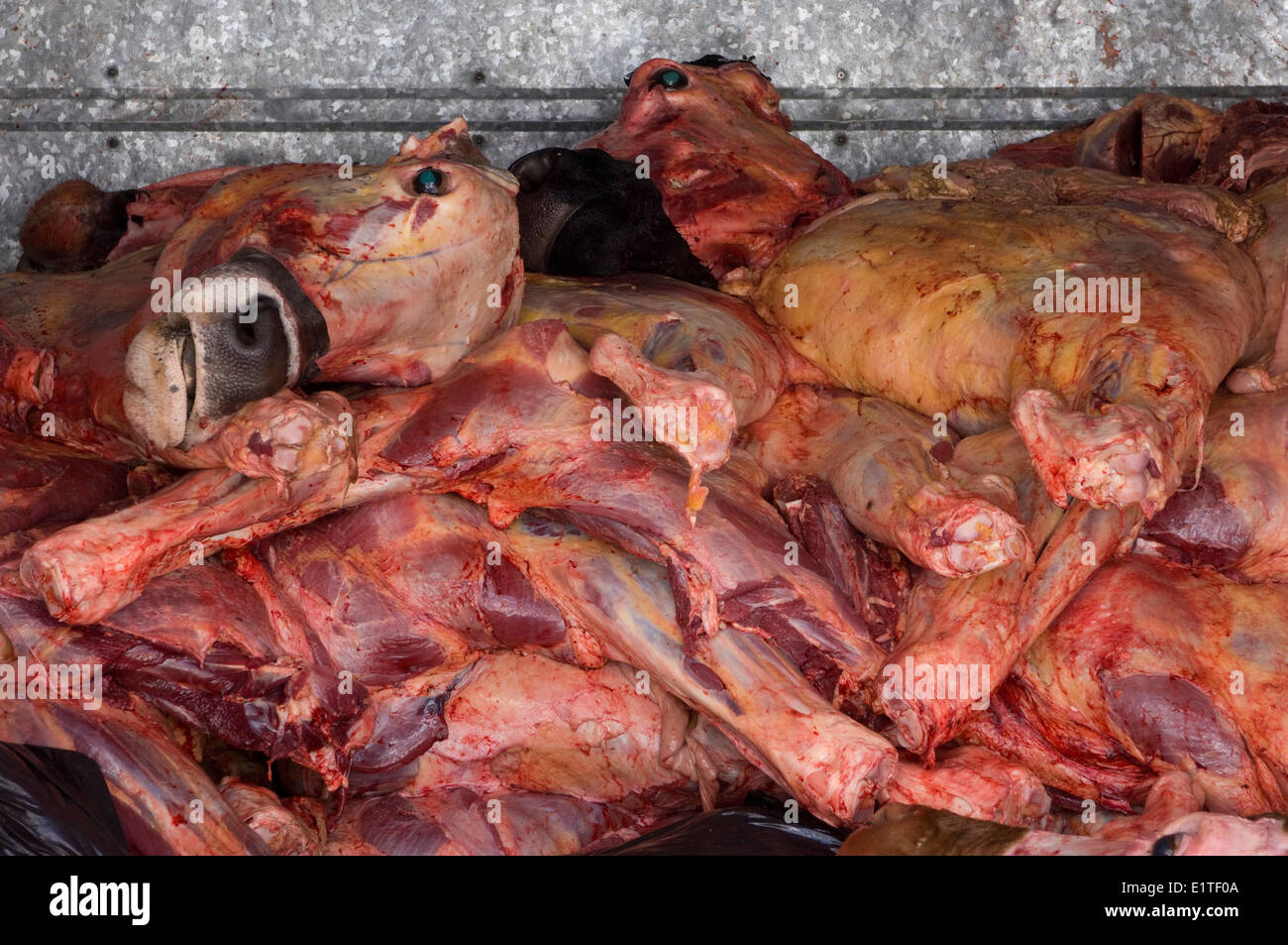 Meat in deliver truck,  in Zihuatanejo, Mexico - Stock Image