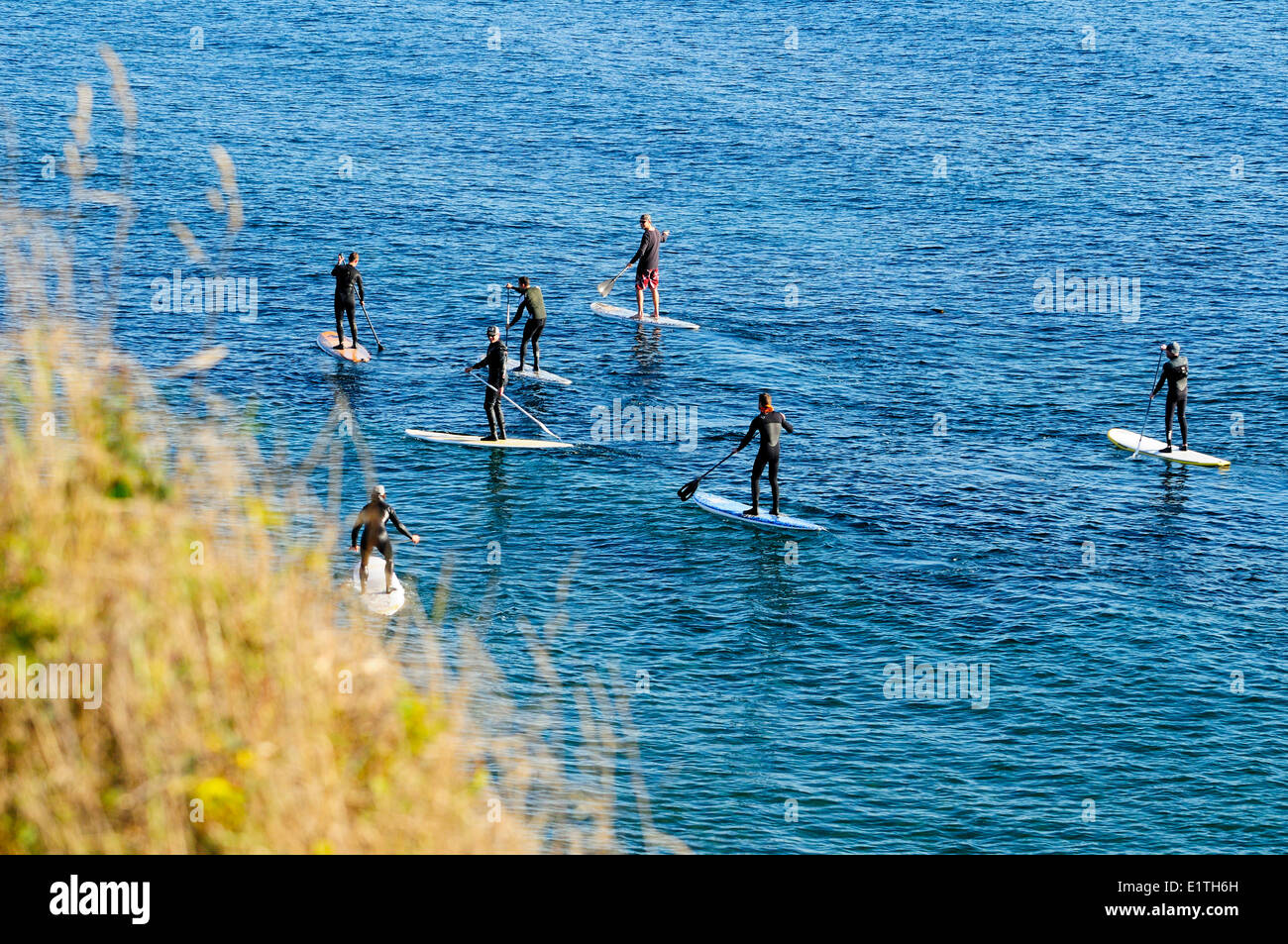 Seven guys use stand up paddleboards to make their way along the water near Dallas Rd. in Victoria, BC. - Stock Image