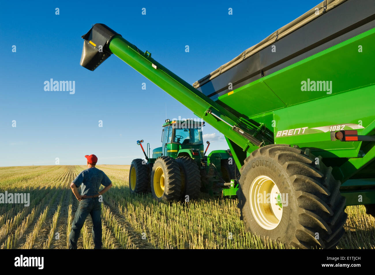 a man next to a tractor and grain wagon during the canola harvest, near Hodgeville, Saskatchewan, Canada - Stock Image