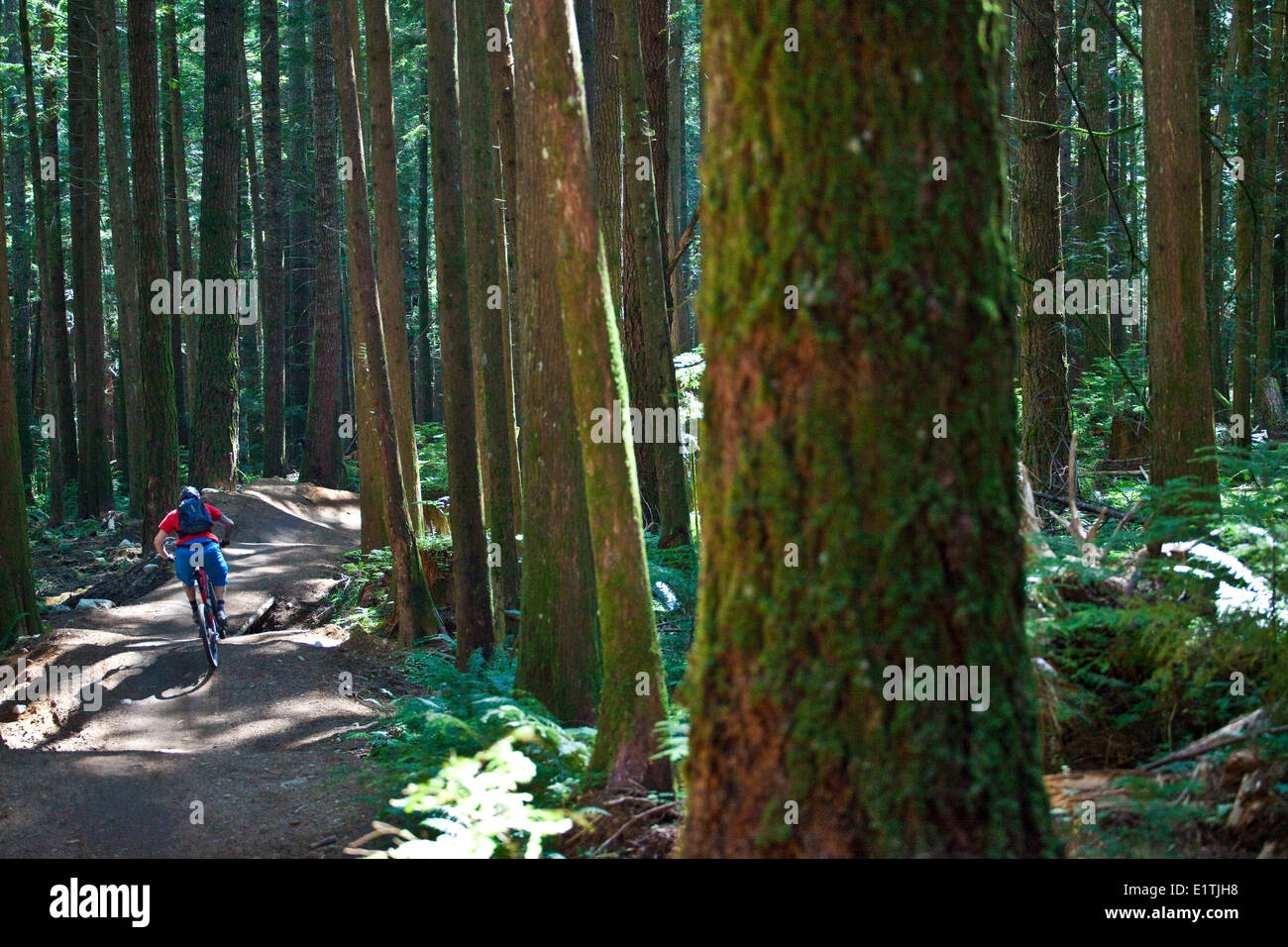 A male mountain biker riding the full nelson trail in Squamish, BC - Stock Image