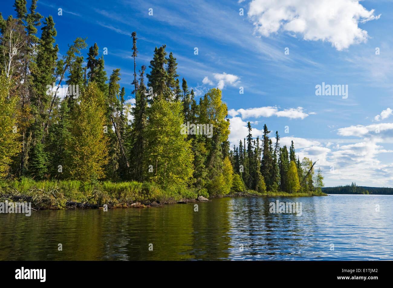 spruce forest along lake, Little Deer Lake, Lac La Ronge Provincial Park,  Northern Saskatchewan, Canada - Stock Image