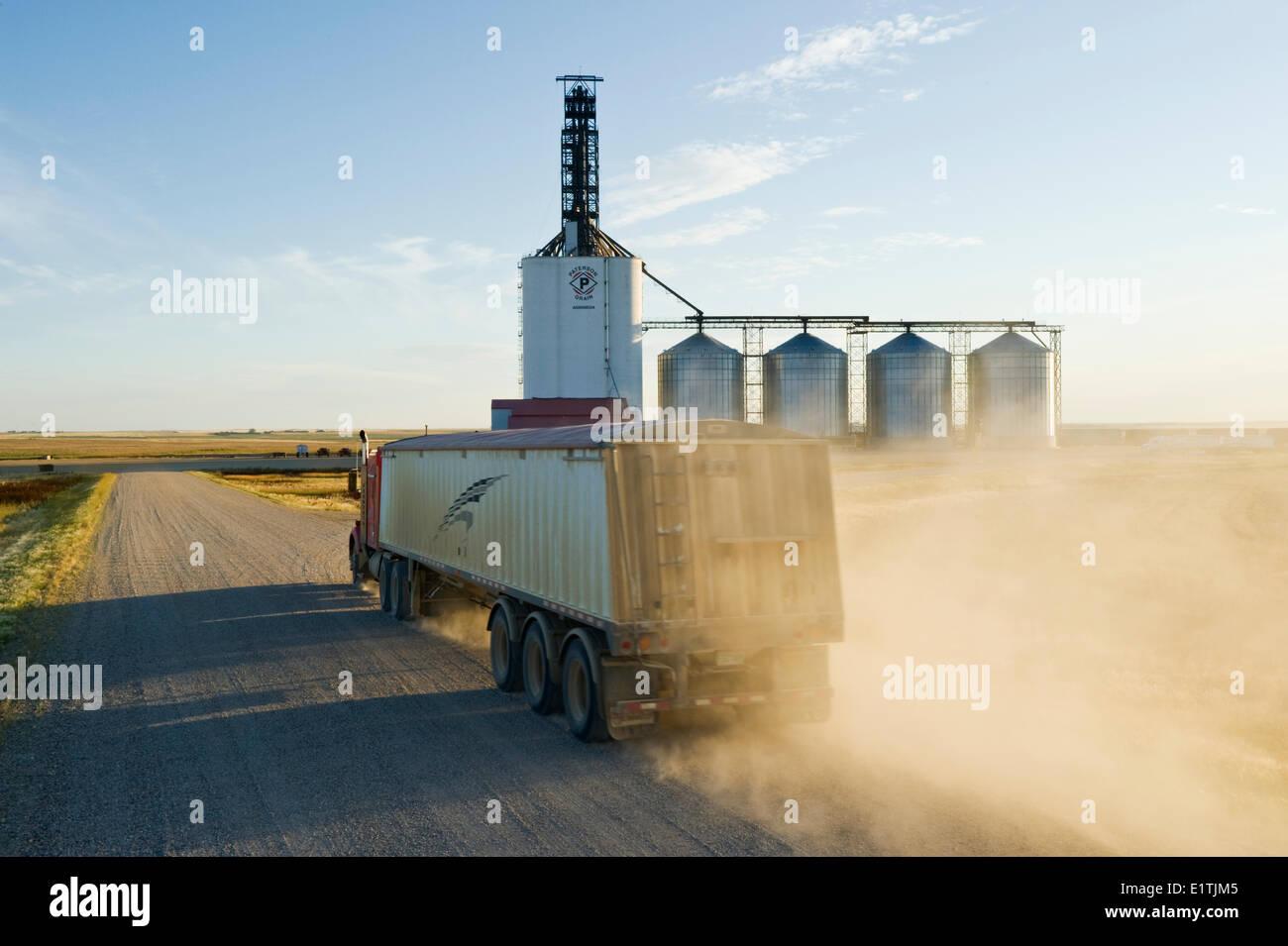 a truck hauls grain to an inland grain terminal/grain elevator  Assiniboia, Saskatchewan, Canada - Stock Image