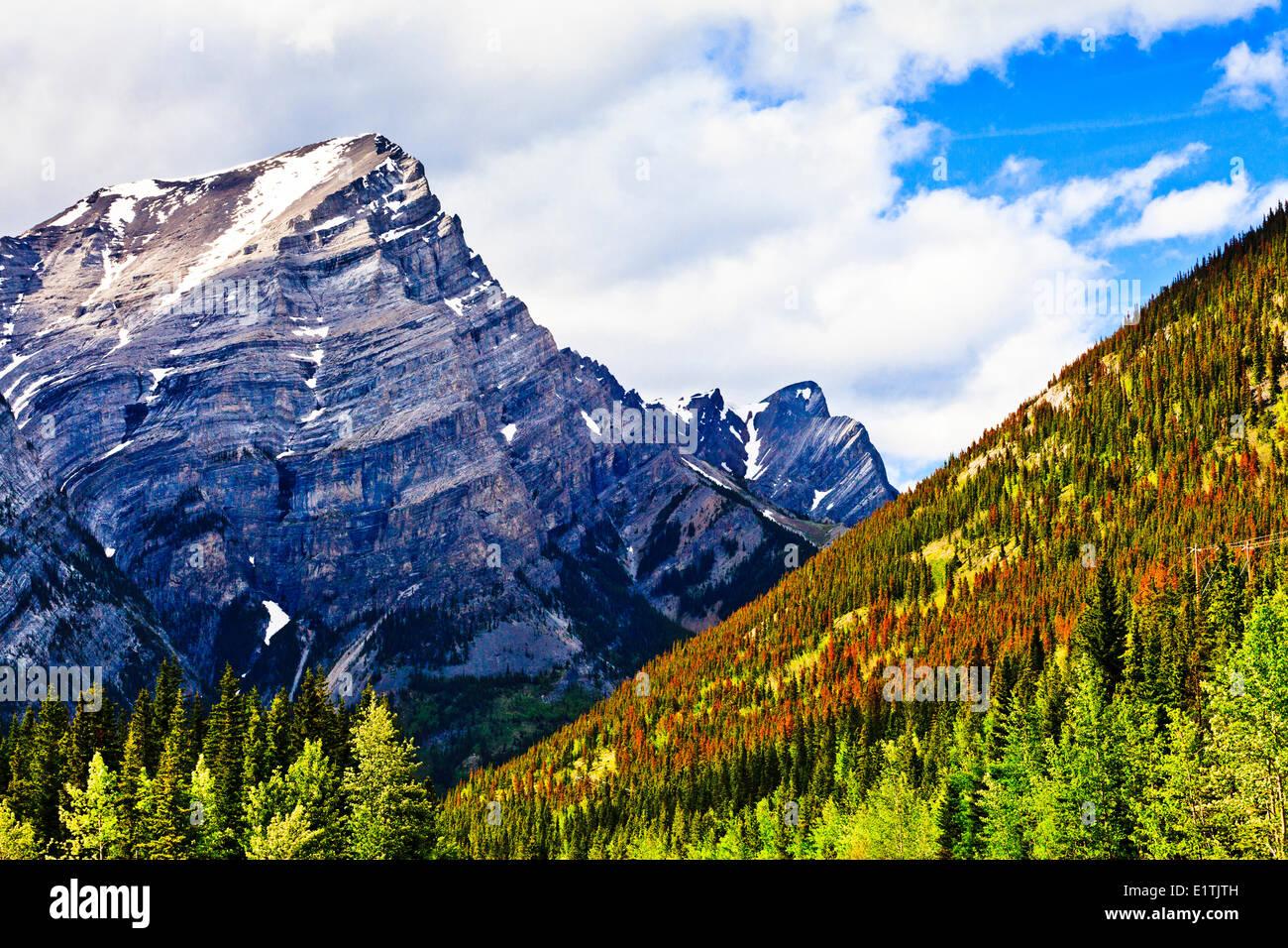 Mountain in Kananaskis Country Alberta, with pine beetle-killed trees. - Stock Image