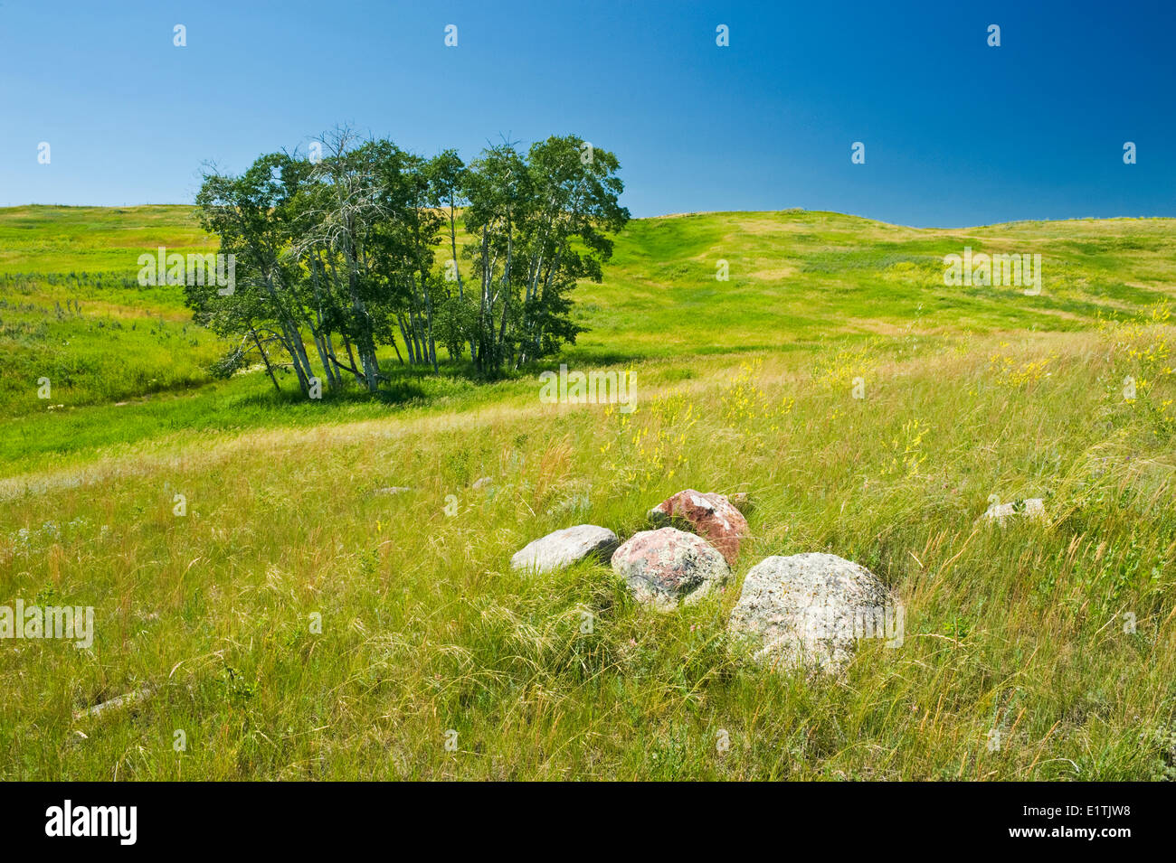 near Swift Current, Saskatchewan, Canada - Stock Image