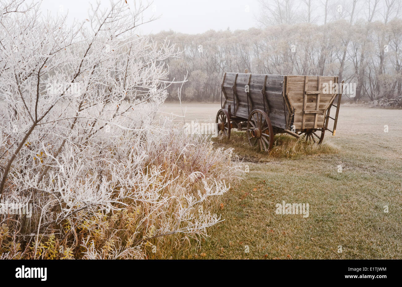 old wagon,frost covered trees, near Oakbank, Manitoba, Canada - Stock Image