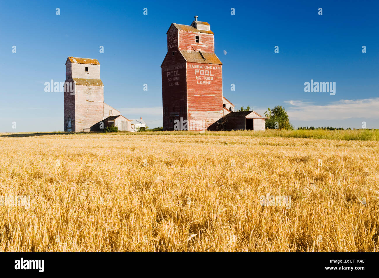 barley field and grain elevators, abandoned town of Lepine, Saskatchewan, Canada - Stock Image