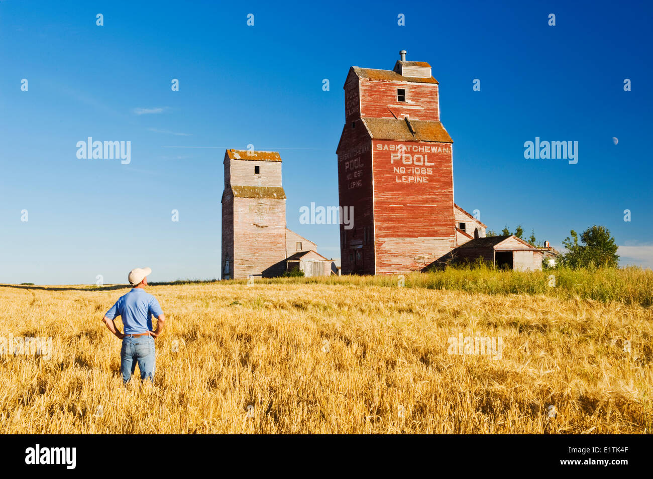 a man looks out over a barley field and grain elevators, abandoned town of Lepine, Saskatchewan, Canada - Stock Image