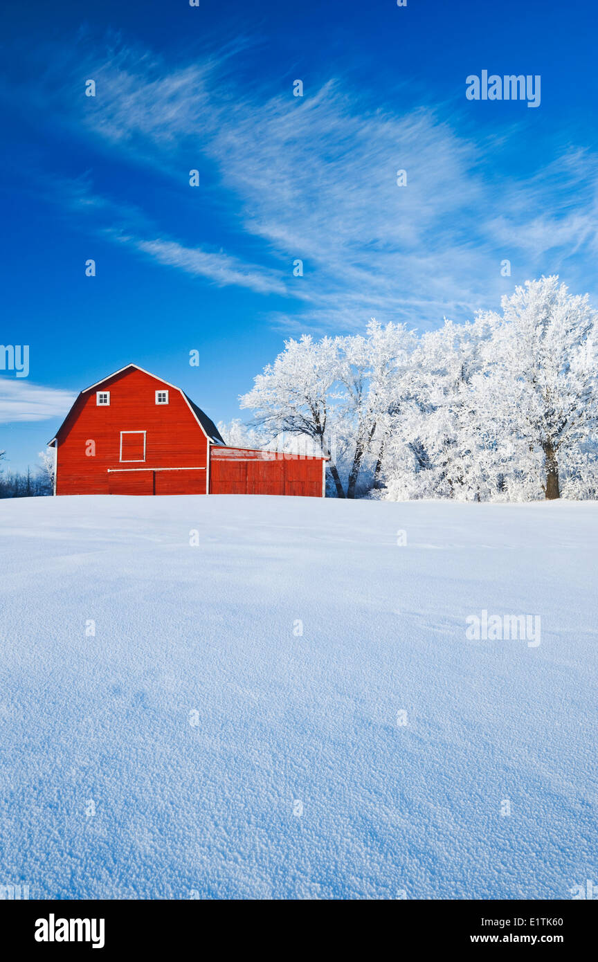 red barn and trees coated with hoarfrost, near Beausejour,  Manitoba, Canada - Stock Image