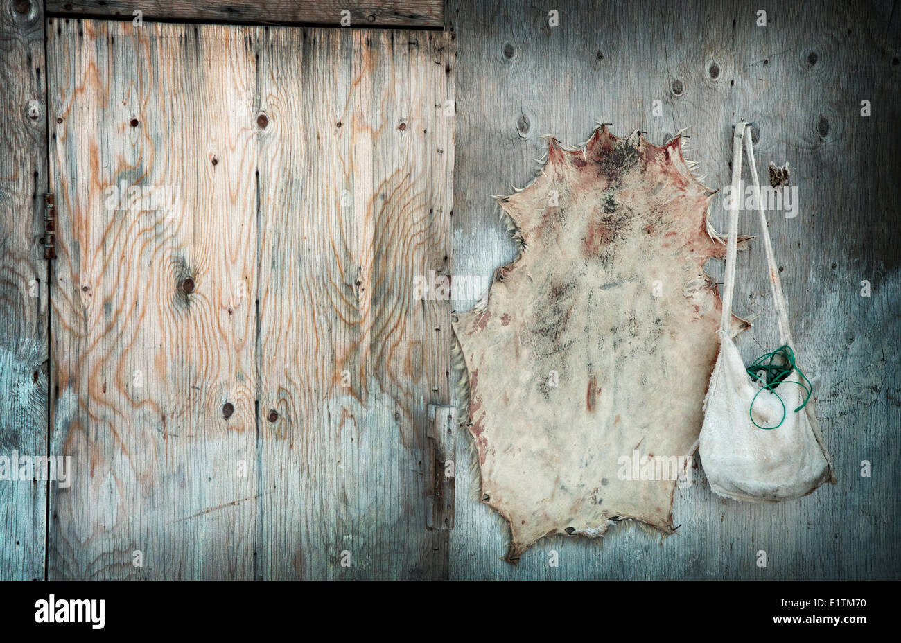 Seal skin drying and seal skin purse Pond Inlet, Nunavut, Canada - Stock Image