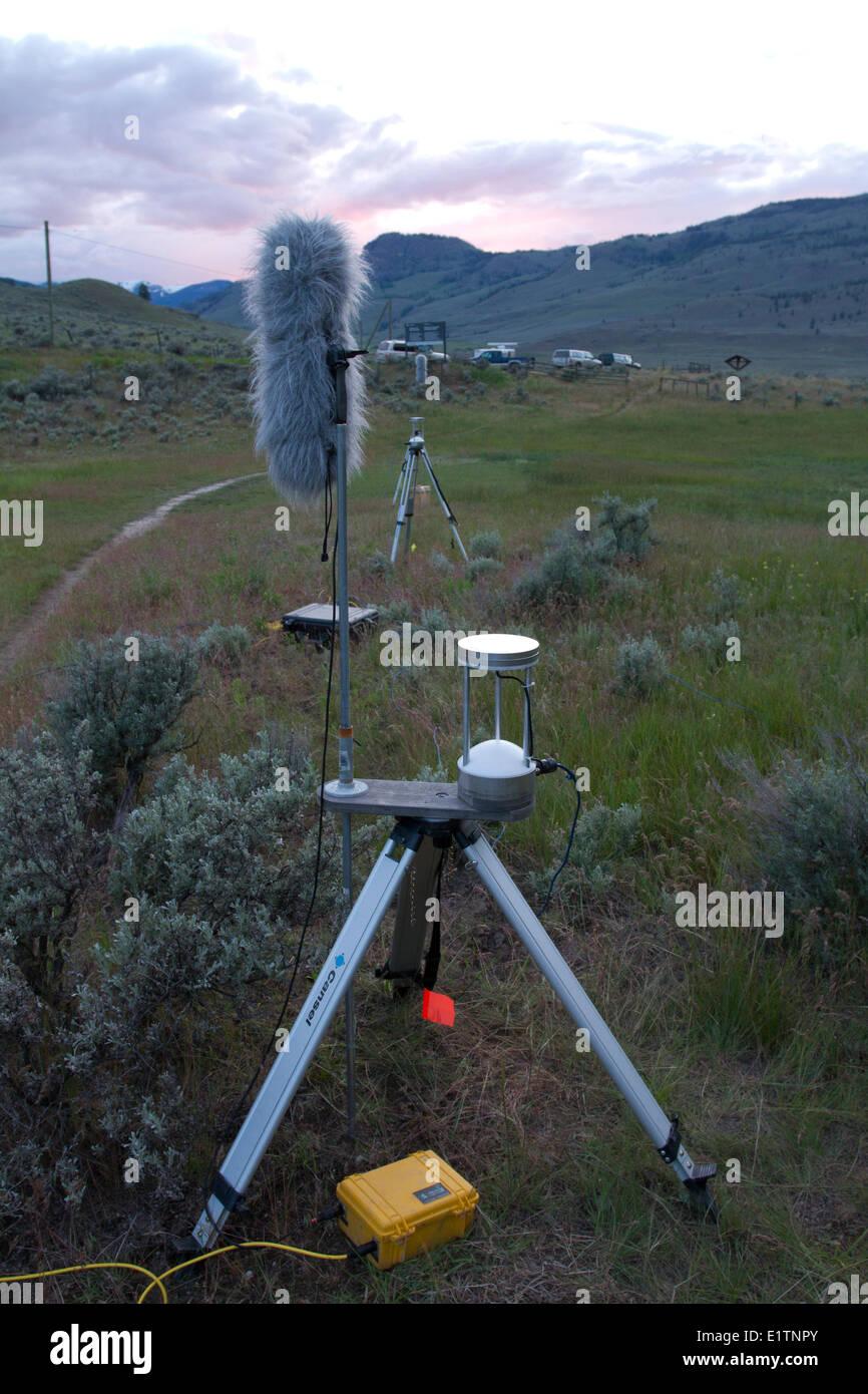 Bat Acoustic Monitoring, Okanagan, BC, Canada - Stock Image