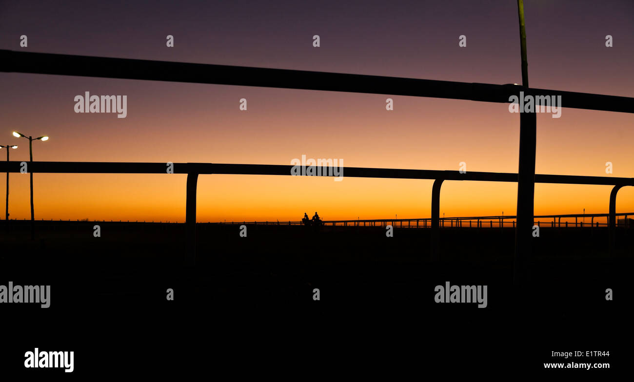 Racehorses in the early morning sunrise in the exercise yard - Stock Image