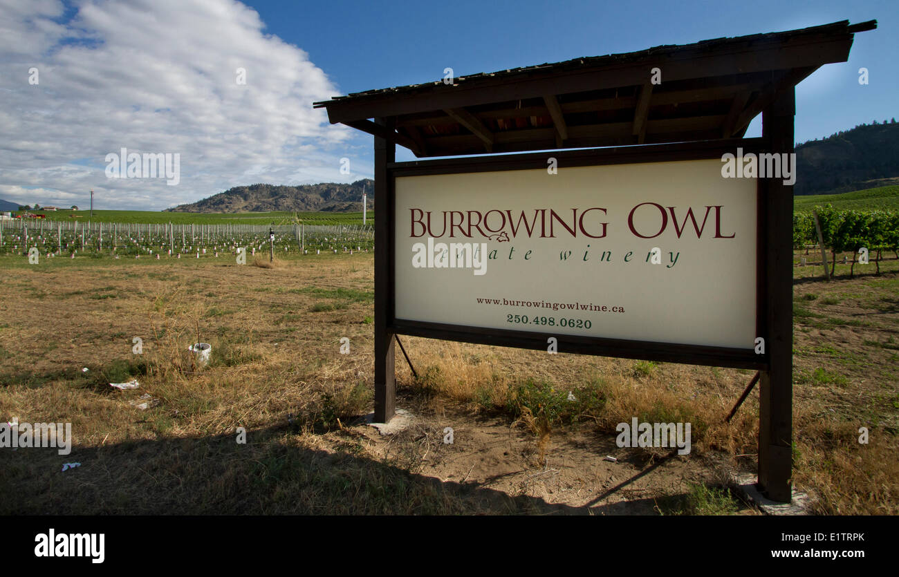 Vineyards, habitat loss, habitat destruction, Okanagan, BC, Canada - Stock Image