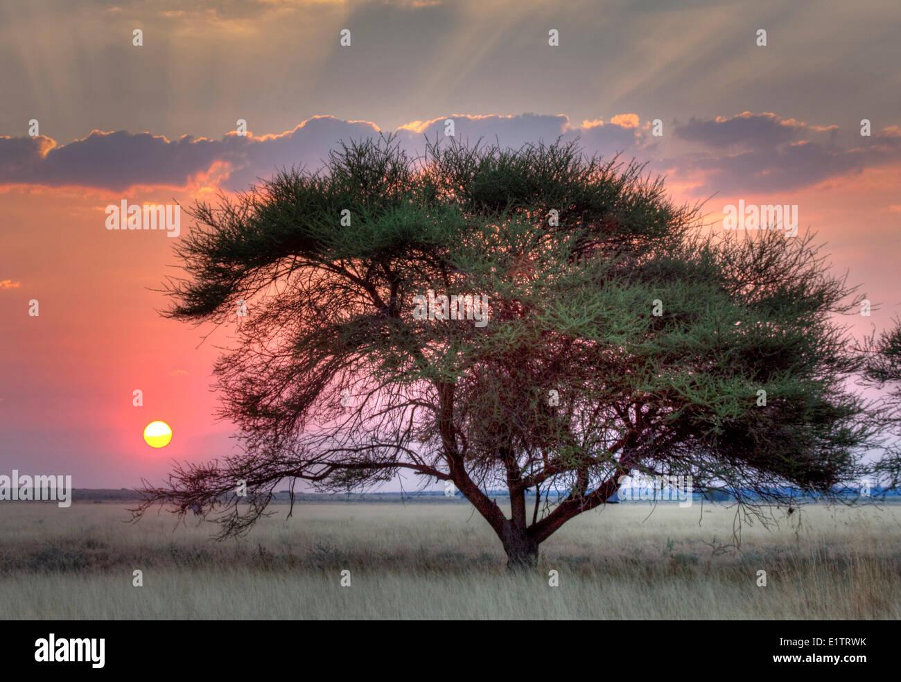 Sunset over the Kalahari, Central Kalahari Game Reserve, Botswana, Africa Stock Photo
