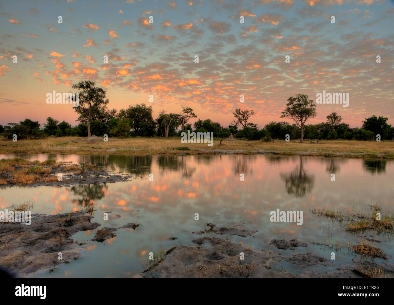 Before Sunrise, Moremi Game Reserve, Botswana, Africa - Stock Image
