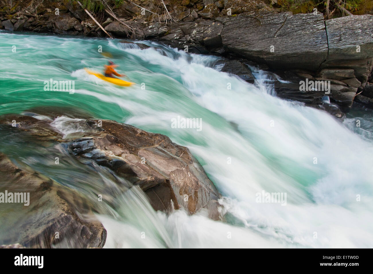 A male kayaker drops into a big rapid on the Fraser River, Mt Robson Provincial Park, BC - Stock Image