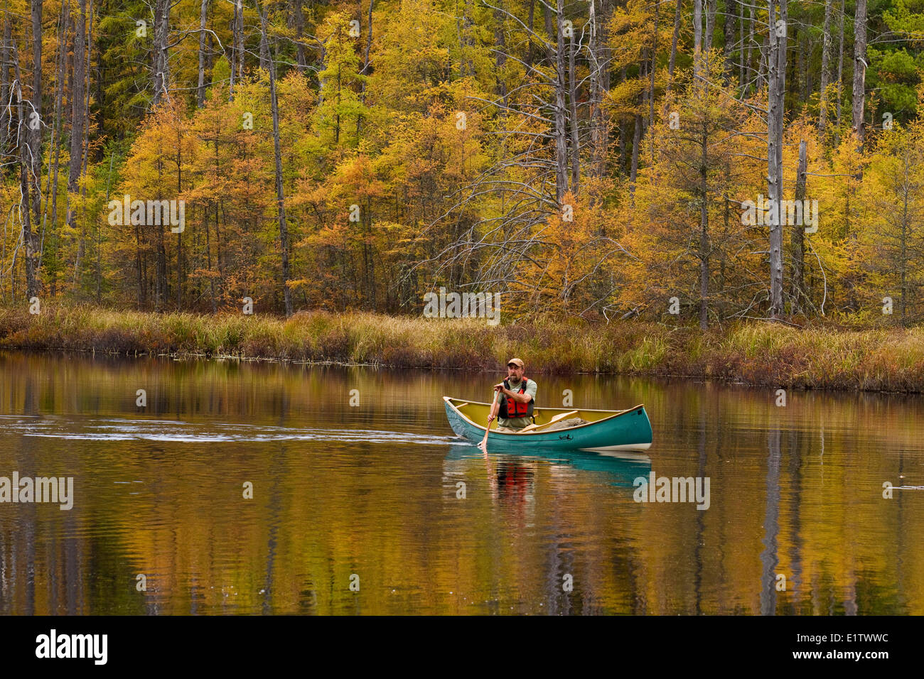Man paddles canoe on still water of small creek in northwestern end of Algonquin Park, Ontario, Canada. - Stock Image