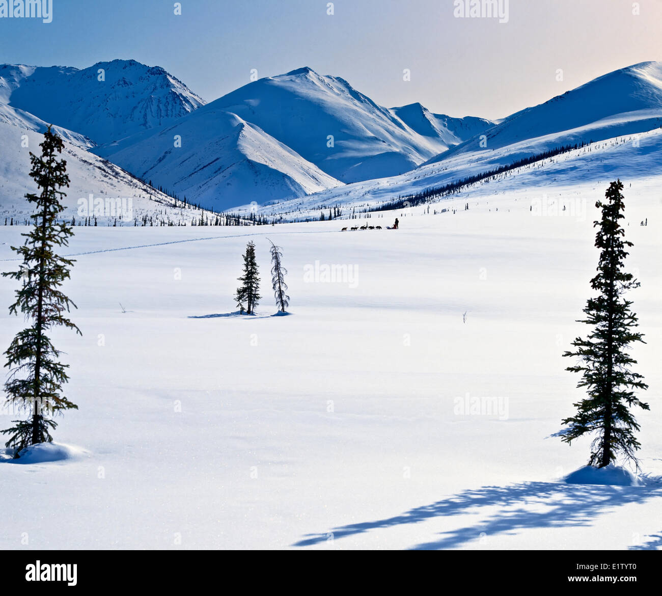 Dog sled team in the endless wilderness the Gates the Arctic National Park Reserve within the Brooks Range northwest - Stock Image