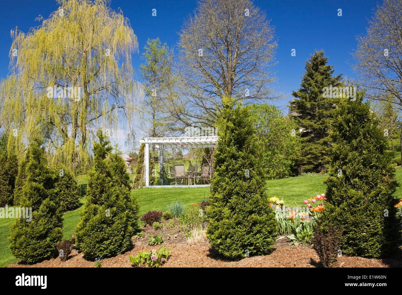 Overall view the flower beds with cedar trees grass slopes the pergola in a landscaped residential backyard garden - Stock Image