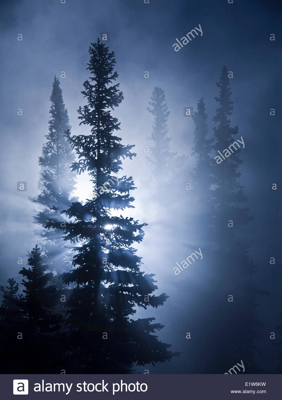 Morning sun bursts through trees and fog, Banff National Park. - Stock Image
