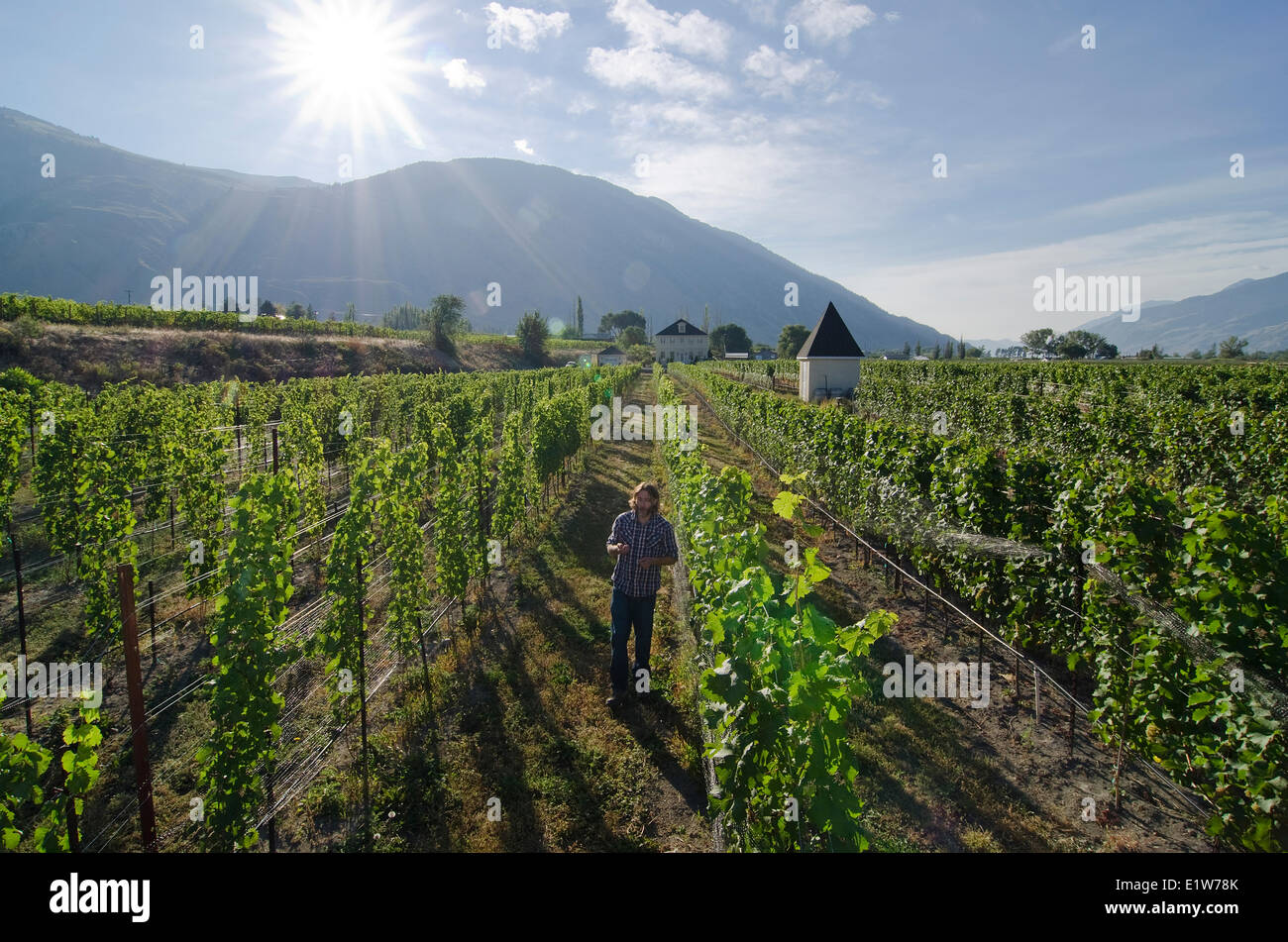 Winemaker samples the grapes at the vineyards Eau Vivre winery in Keremeos in the Similkameen region British Columbia - Stock Image