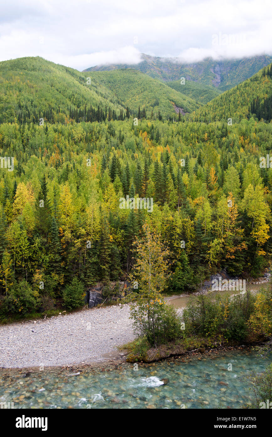 Deciduous coniferous forest regenerated after fire Trout River valley N Muncho Prov Park Highway 97 Northern British - Stock Image