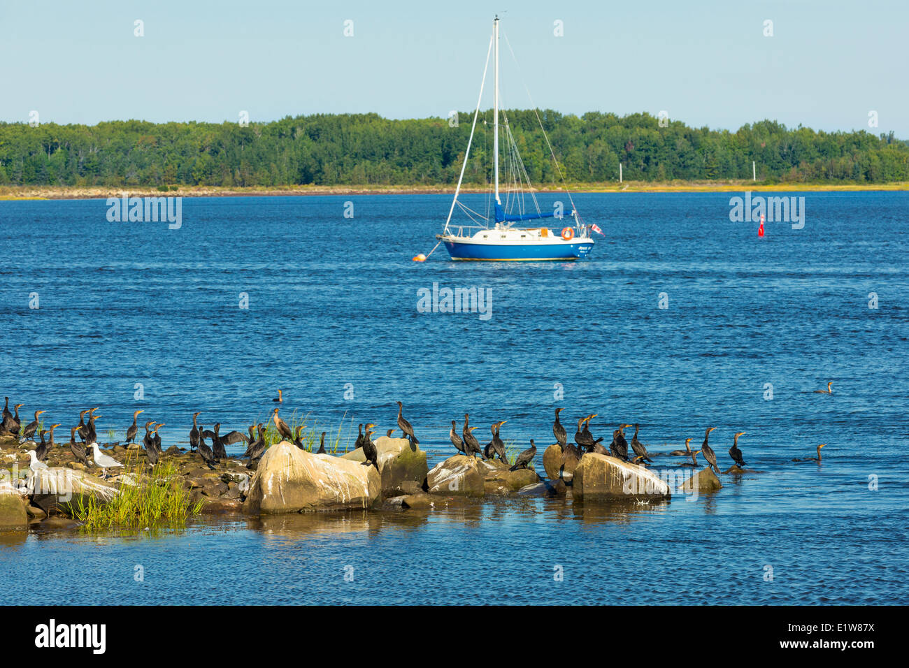 Cormorants and sailboat, Wallace, Nova Scotia, Canada - Stock Image